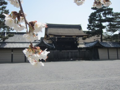 Cherry Blossoms at Imperial Palace